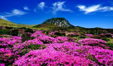 Jeju Wants to Become the Latest Blockchain Island